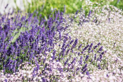 Rauscher Garten + Landschaft